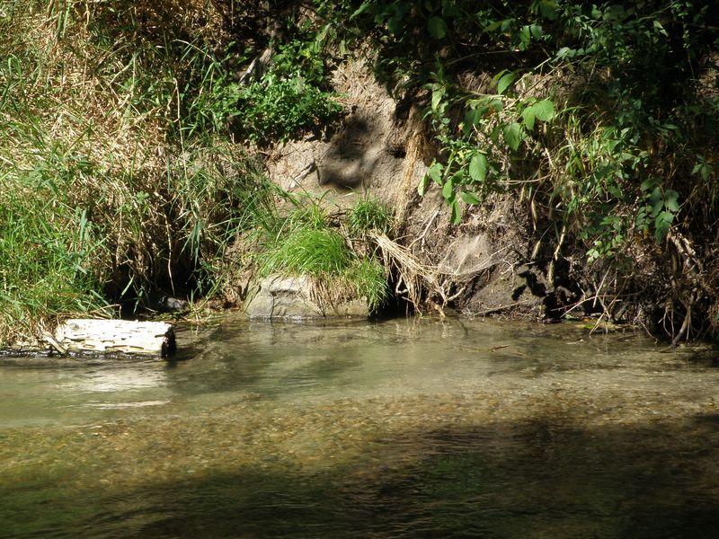 Creekshot