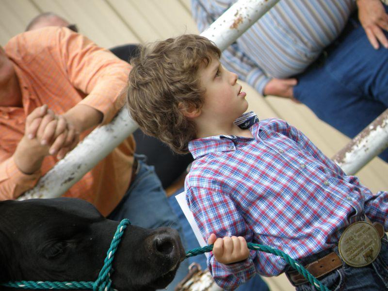 Showing calf